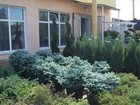Изображение в Строительство и ремонт Ландшафтный дизайн Декоративные растений различных форм и размеров, в Краснодаре 0