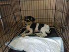 Изображение в Собаки и щенки Продажа собак, щенков Продам собаку маленькой породы для двора. в Краснодаре 100