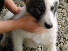 Фото в Собаки и щенки Продажа собак, щенков щенок 4 месяца, красивый, белый, ласковый, в Краснодаре 0