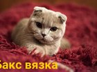 Фото в Кошки и котята Вязка Вислоухий красавец примет кошечку на своей в Краснодаре 2000