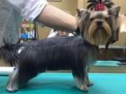 Скачать бесплатно foto Стрижка собак Профессиональный груминг в зоо-салоне 40351105 в Краснодаре