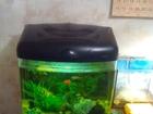 Увидеть фотографию Аквариумы Качественный аквариум 50 л со всем содержимым 40756904 в Краснодаре