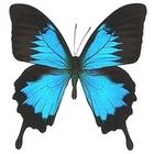 Живые тропические бабочки Бабочки Лучший подарок