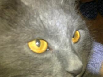 Смотреть фото Отдам даром - приму в дар Красивый котенок ждет своего доброго и заботливого хозяина 38555704 в Краснодаре