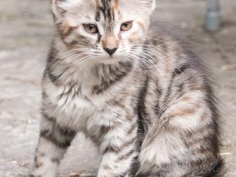 Скачать бесплатно фотографию Отдам даром - приму в дар котята 39237675 в Краснодаре