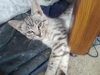 Увидеть фотографию Отдам даром - приму в дар Отдам очень красивых и ласковых котят 68043470 в Краснодаре