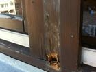 Фотография в Строительство и ремонт Двери, окна, балконы Мы предлагаем все виды ремонта окон .   -ремонт в Красногорске 500