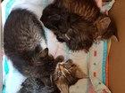 Смотреть foto Отдам даром - приму в дар отдам даром котят в добрые руки 39903409 в Красногорске