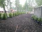 Просмотреть изображение Ландшафтный дизайн Саженцы Кедра,Ели,Сосны 34459037 в Красноярске