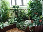 Просмотреть foto  Уход за комнатными растениями Зеленая Ноль Три 34543781 в Красноярске