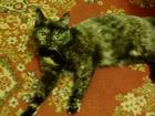 Фото в Потерянные и Найденные Потерянные Потерялась кошка, любимица семьи 25. 04. в Красноярске 0
