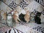 Фото в Отдам даром - Приму в дар Отдам даром 6-ть чудных котят ищут себе любящих хозяев! в Красноярске 0