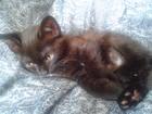 Скачать бесплатно изображение Отдам даром Подарю черного котика! 37214136 в Красноярске