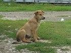 Скачать фото Отдам даром - приму в дар ищут дом щенки 37760323 в Красноярске