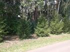 Смотреть изображение Растения Саженцы Ели 38550453 в Красноярске