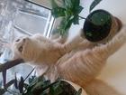 Скачать бесплатно фотографию Потерялись животные 28, 04, 18 потерялся светло-рыжий кот 65821962 в Красноярске