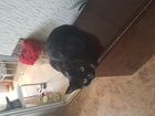 Свежее фотографию  черная кошка ищет кота для вязки 66461463 в Красноярске
