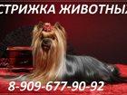 Свежее фото  Стрижка кошек и собак выезд на дом 32929098 в Балашихе