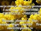 Скачать бесплатно фото  Мимоза оптом с доставкой - Мимоза оптом из первых рук 34527411 в Москве