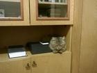 Скачать фото Потерянные найден кот 34786359 в Кургане