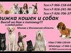 Уникальное изображение  Стрижка кошек и собак Выезд на дом в любой район Москвы и Московской области 37006604 в Москве