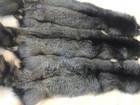 Скачать бесплатно изображение  Выделанные шкурки чернобурки в розницу и оптом 37106558 в Москве