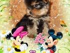 Изображение в   Красивые высокопородные декоративные щенки в Кургане 30000