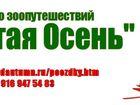 Скачать изображение  Поездки на выставки собак 38588055 в Москве