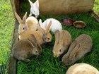 Фотография в   Предлагаем профессиональный корм для кроликов в Екатеринбурге 1