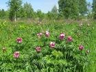 Скачать изображение  Реализуем семена дикорастущих трав, деревьев и кустарников, 38986382 в Новокузнецке