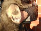 Просмотреть foto  Кавказской овчарки щенка 39561927 в Яхроме