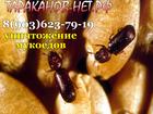 Уникальное изображение  Мукоеды, Как уничтожить, вытравить, вывести? Обработка кухни от мукоедов, 39664106 в Москве