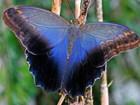 Увидеть foto  Живые тропические бабочки Caligo Memnom Бабочки Лучший подарок! 39712556 в Сочи
