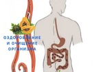 Скачать foto  Программы очищения организма от паразитов - сок бальзам Алатоо (Alatoo) Mehrigiyo 68759992 в Москве