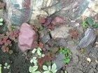 Природный камень от мелких до крупных разных цв