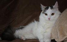 Кошка-крошка Нэнси