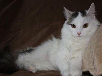 Просмотреть фотографию  Кошка-крошка Нэнси 32713464 в Москве