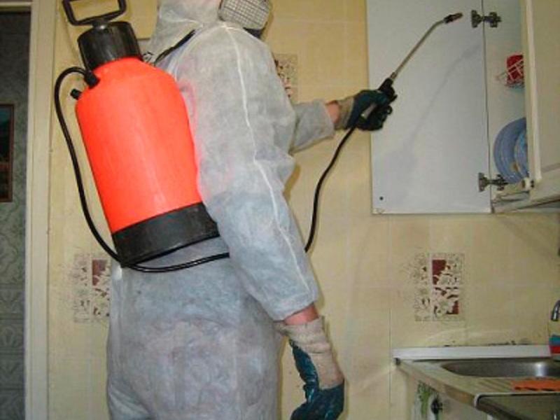 Уничтожение тараканов в квартире цены москва