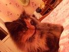 Скачать бесплатно фотографию Отдам даром Котёнок ищет хозяина 37546222 в Курске