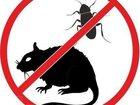 Уникальное фотографию  Уничтожение клопов тараканов крыс мышей в Кызыле 32637853 в Кызыле