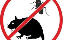 Уничтожение клопов тараканов крыс мышей в Кызыле