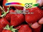 Смотреть foto Растения Продаю семена земляники 32396975 в Ленинске
