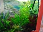 Просмотреть изображение Растения Аквариумные растения из домашнего аквариума в Ликино-Дулево 40114730 в Ликино-Дулево