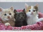 Фотография в Кошки и котята Продажа кошек и котят Замечательные персидские котята, ходят в в Липецке 0