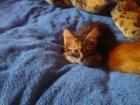 Фотография в   Отдам замечательных котят : одна девочка в Липецке 0