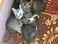 Отдам котят в хорошие руки Отдам котят в хорошие руки. Котятам 1 месяц. Мама оче