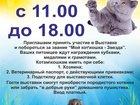 Фото в Кошки и котята Вязка Приглашаем принять участие в выставке кошек! в Лобне 100