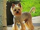 Фотография в Собаки и щенки Стрижка собак Дипломированный грумер с большим опытом. в Лобне 1000