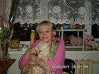 Фото в   Пропала собачка американский кокер спаниель в Лобне 0