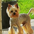 стрижка собак в Лобне